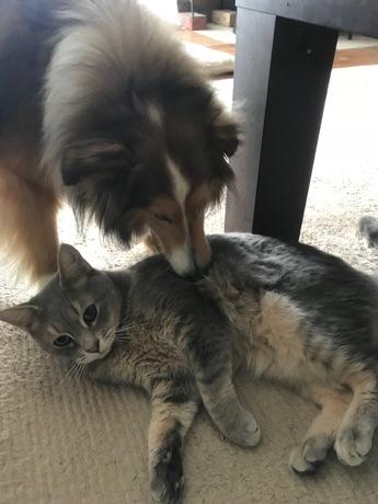 201801_cat&dog犬猫.jpg