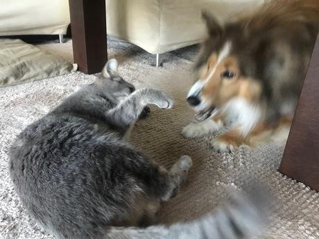 201802_cat&dog犬猫.jpg