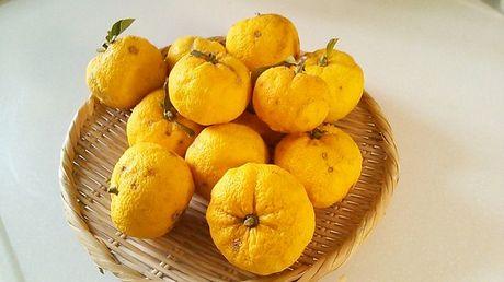 citrus_junos.jpg